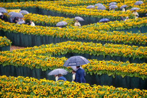 Van Gogh,Países Bajos